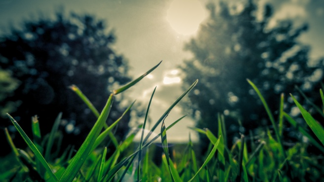 vectorbeastcom-grass-sun.jpg